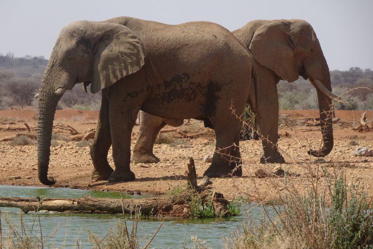 Rondreis Namibië: reisroute en tips