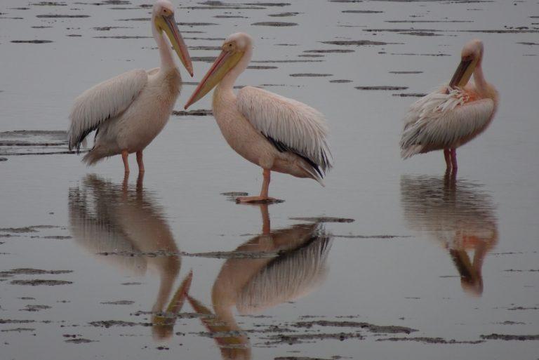 Pelican Point Swakopmund